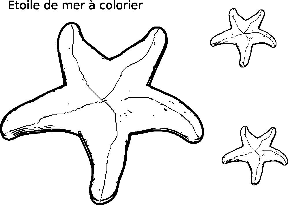 Coloriage étoile de mer