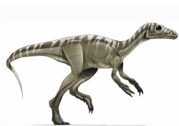 Eoraptor Dinosaure