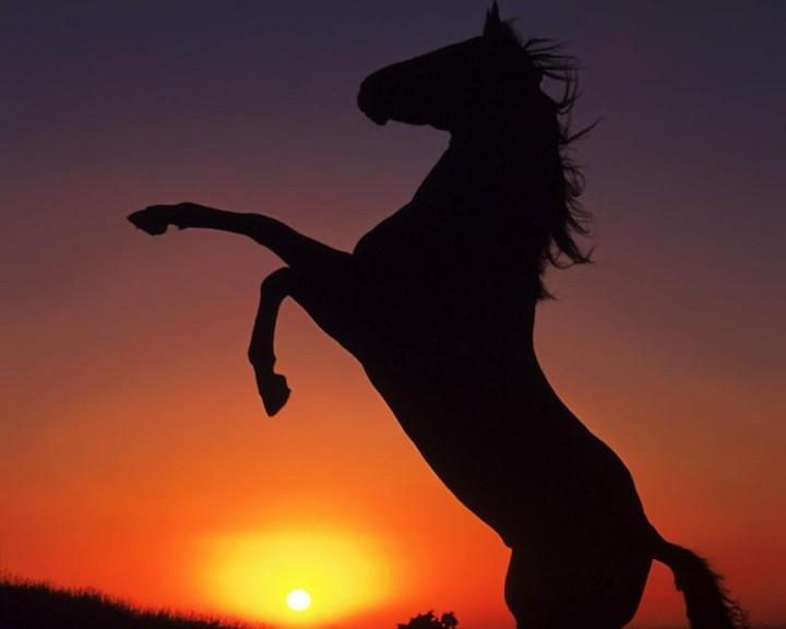 Cheval coucher de soleil
