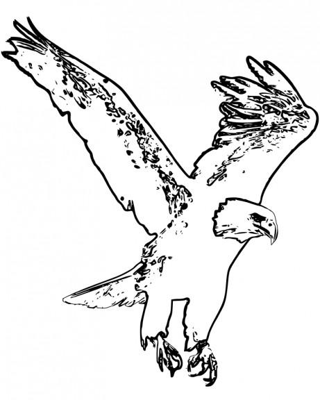 Coloriage aigle en vol