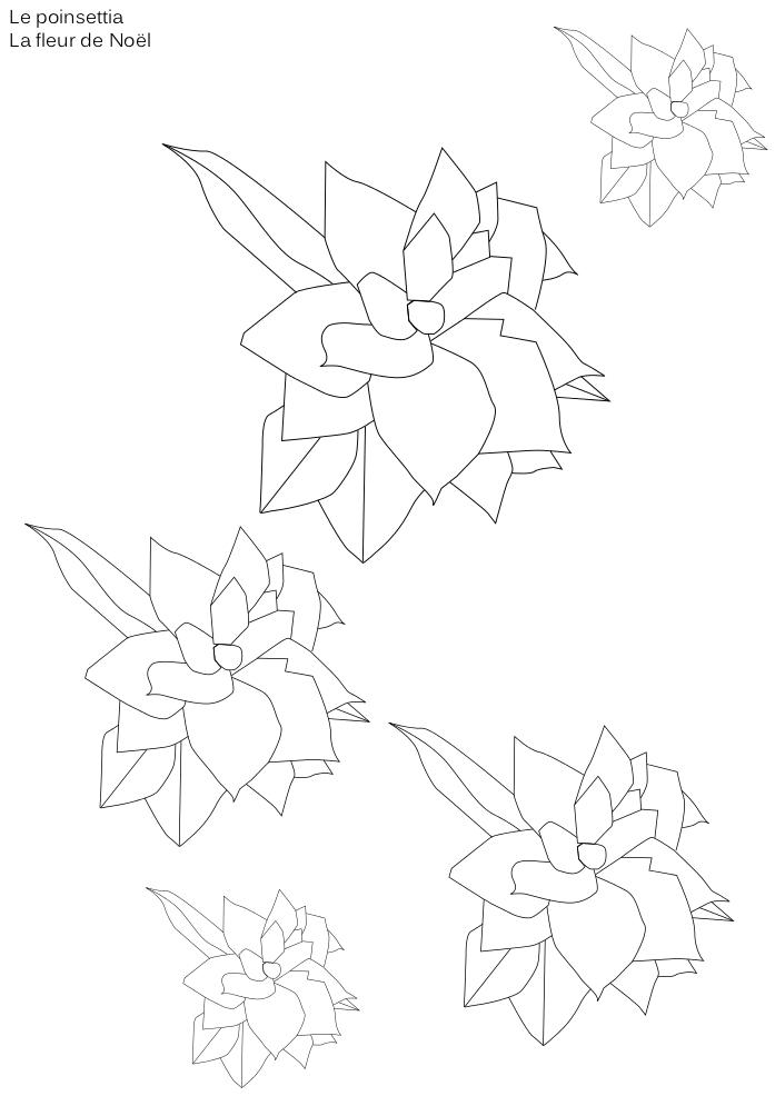 Coloriage fleur Poinsettia
