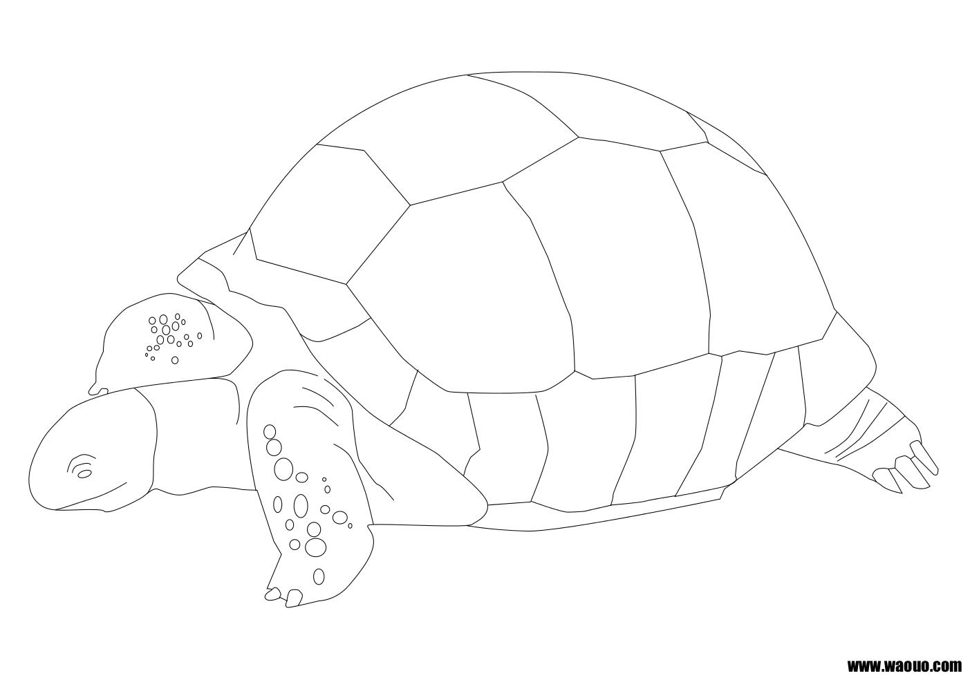 Coloriage tortue géante