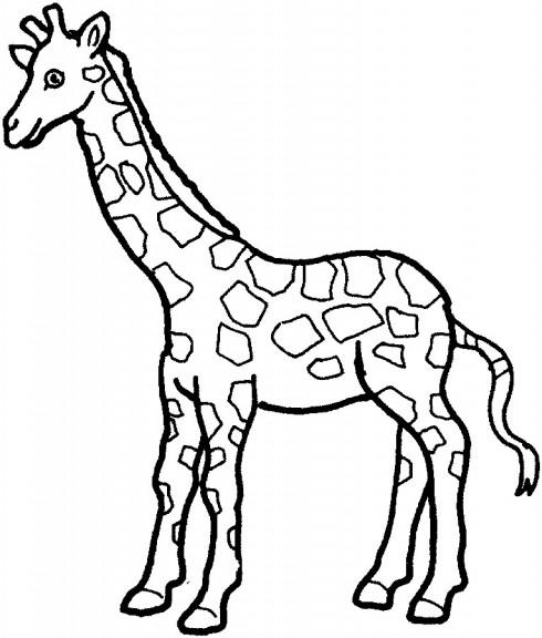 Dessin girafe coloriage girafe dessin imprimer et colorier - Girafe a imprimer ...