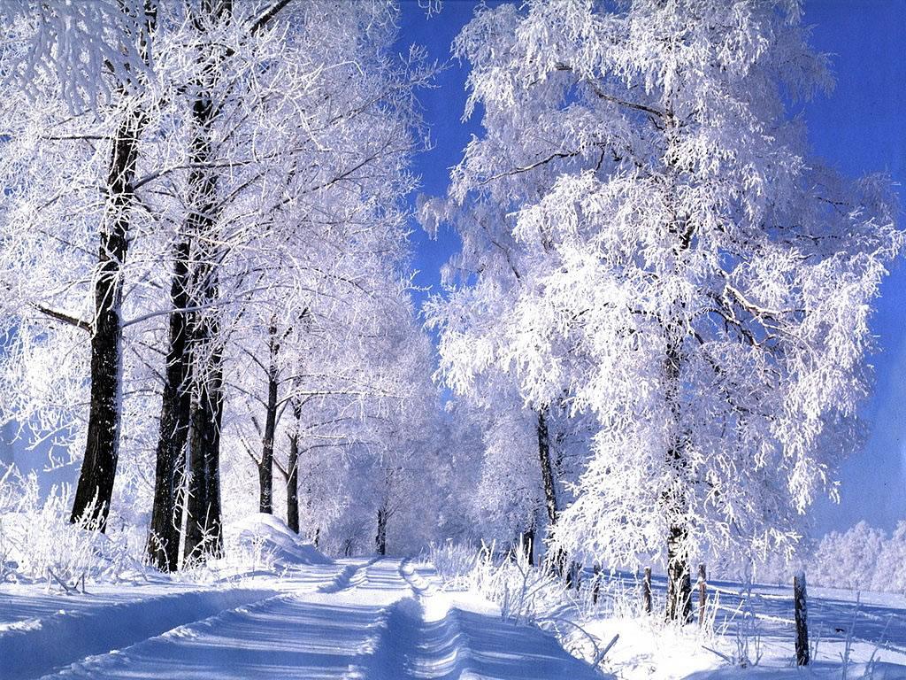 Foret blanche sous la neige