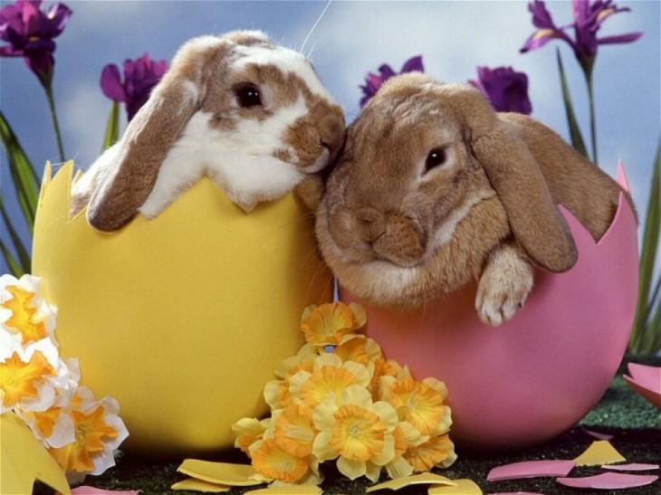 lapins de p ques coloriage lapins de p ques imprimer et colorier. Black Bedroom Furniture Sets. Home Design Ideas