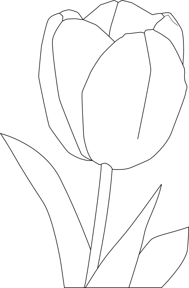 Coloriage tulipe