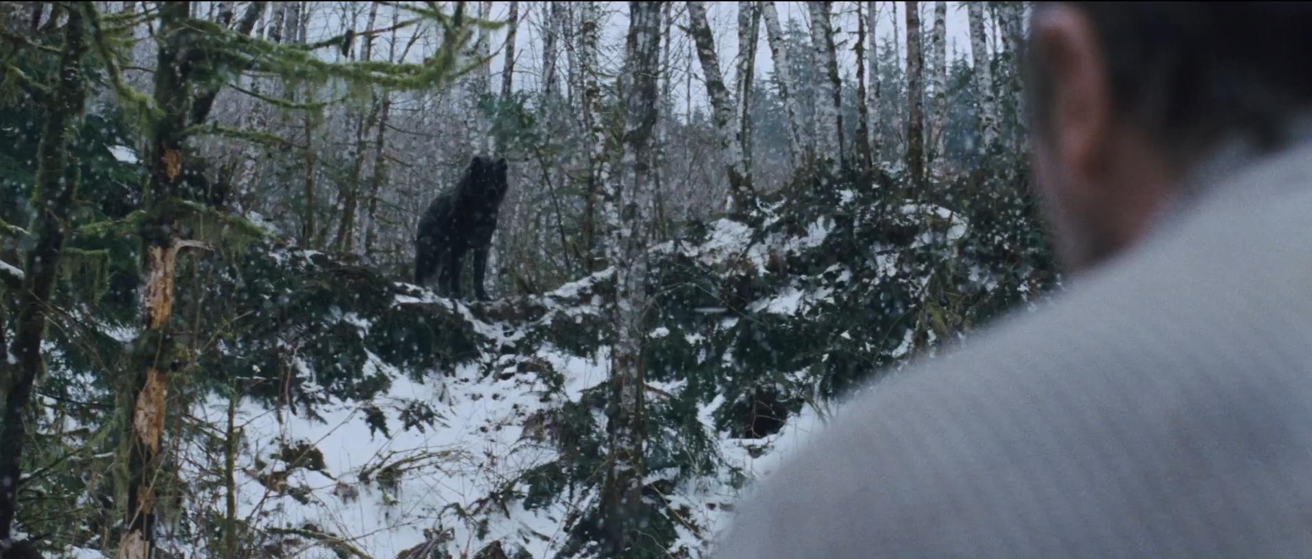 Liam Neeson Le Territoire des Loups film