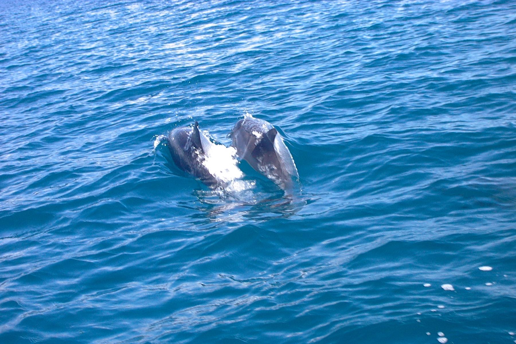 Coloriage b b dauphin imprimer et colorier - Dessin a imprimer de dauphin ...