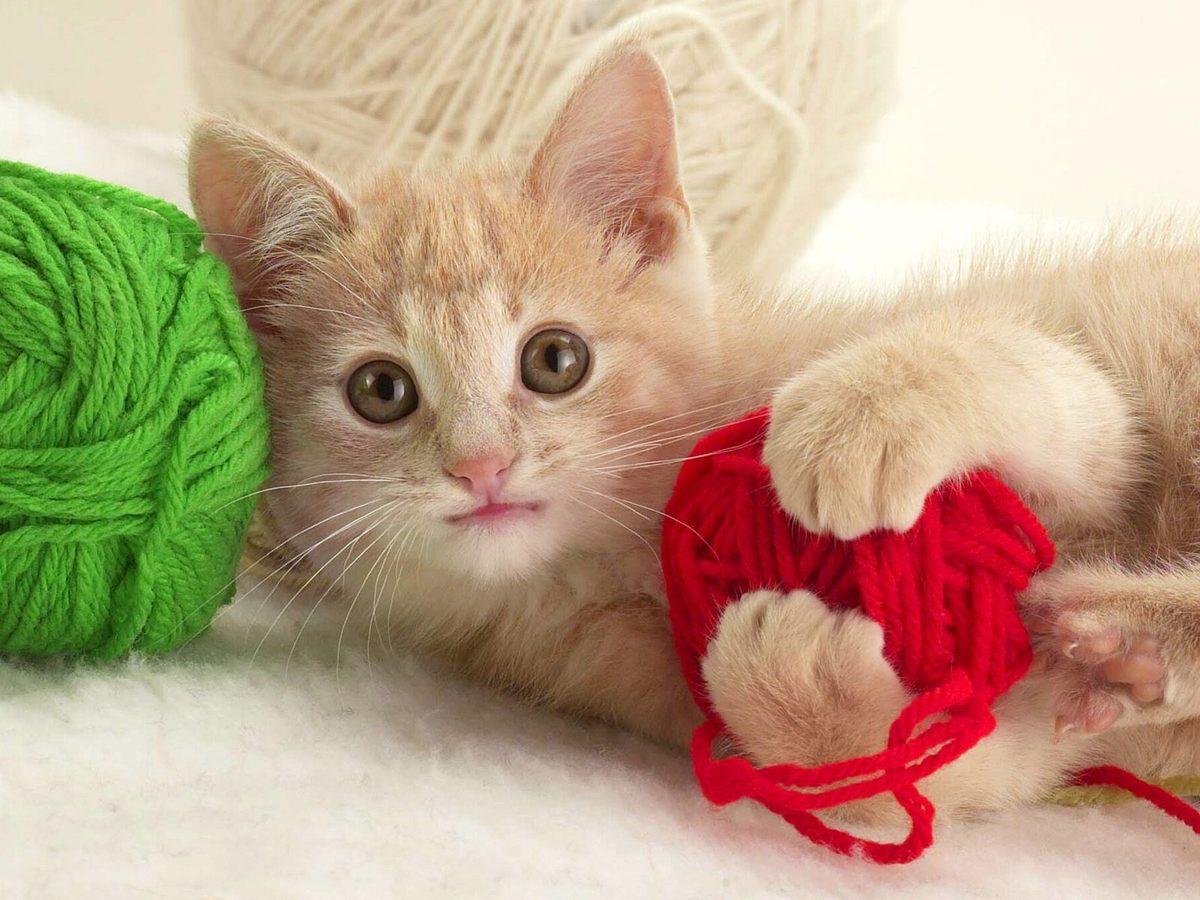 Coloriage chaton dort imprimer et colorier - Petit chaton gratuit ...