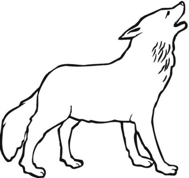 Coloriage loup gris