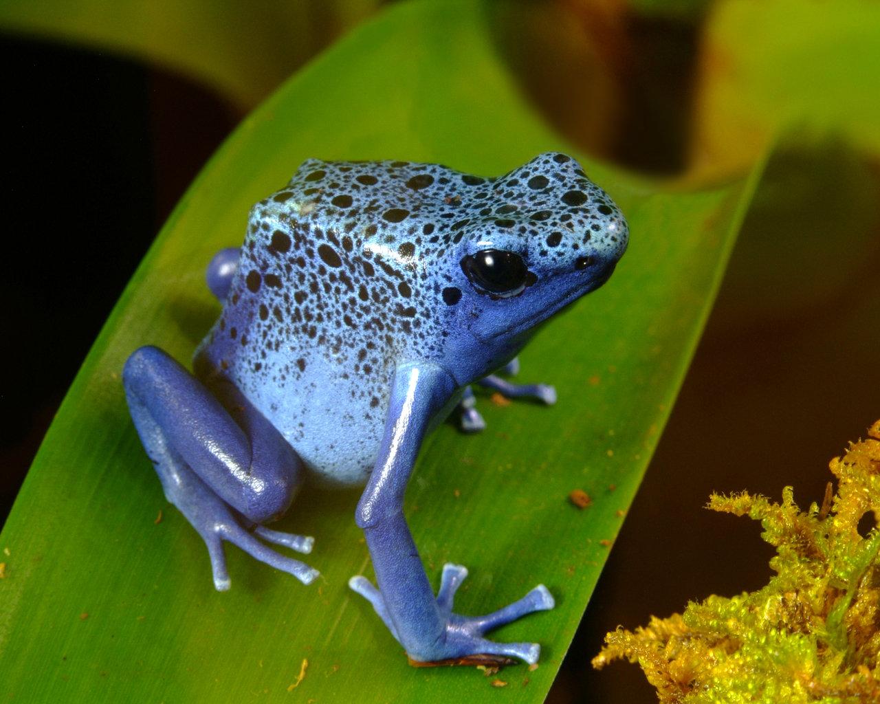 Coloriage grenouille imprimer et colorier - Dessin de grenouille a imprimer ...