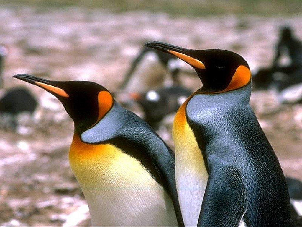 coloriage pingouin mignon imprimer et colorier. Black Bedroom Furniture Sets. Home Design Ideas