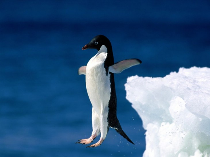 Pingouin saute