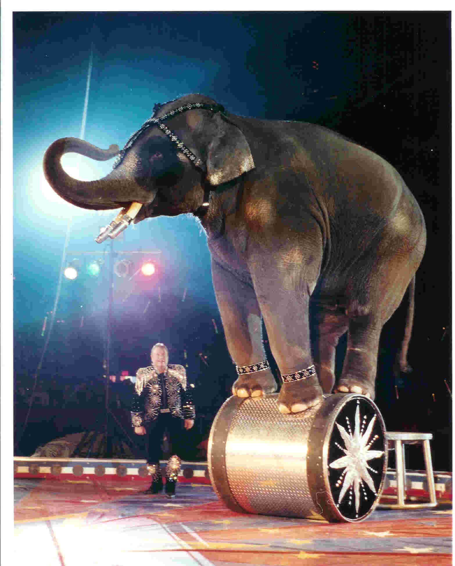 the abuse of circus elephants essay Ban circus animals join or donate to peta or american society for the prevention of cruelty towards animals propose a bill to your congressman to ban.