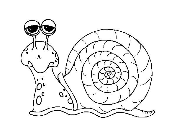 Coloriage Escargot Gratuit A Imprimer