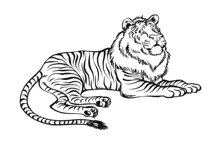 coloriage ligre lion tigre imprimer et colorier. Black Bedroom Furniture Sets. Home Design Ideas