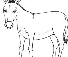 Coloriage âne