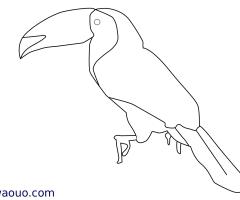 Coloriage Toucan à carène