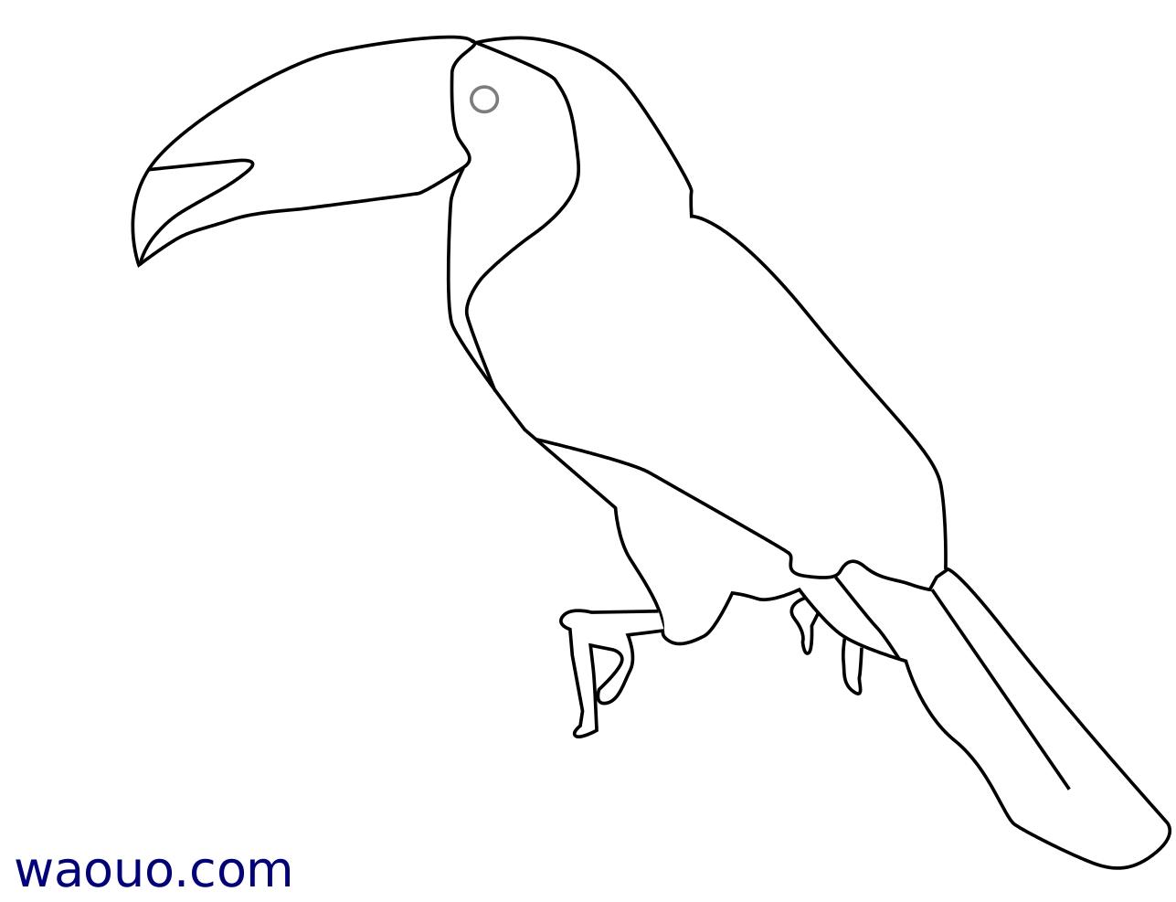 Coloriage toucan car ne gratuit imprimer - Coloriage toucan a imprimer ...