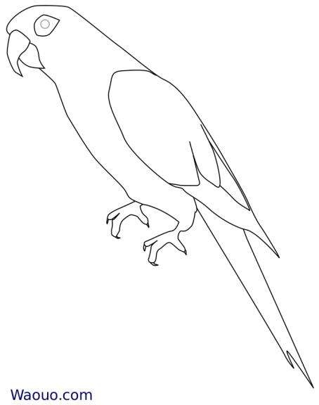 Perroquet Ara coloriage