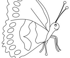 Coloriage papillon enfant