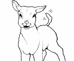 Coloriage agneau