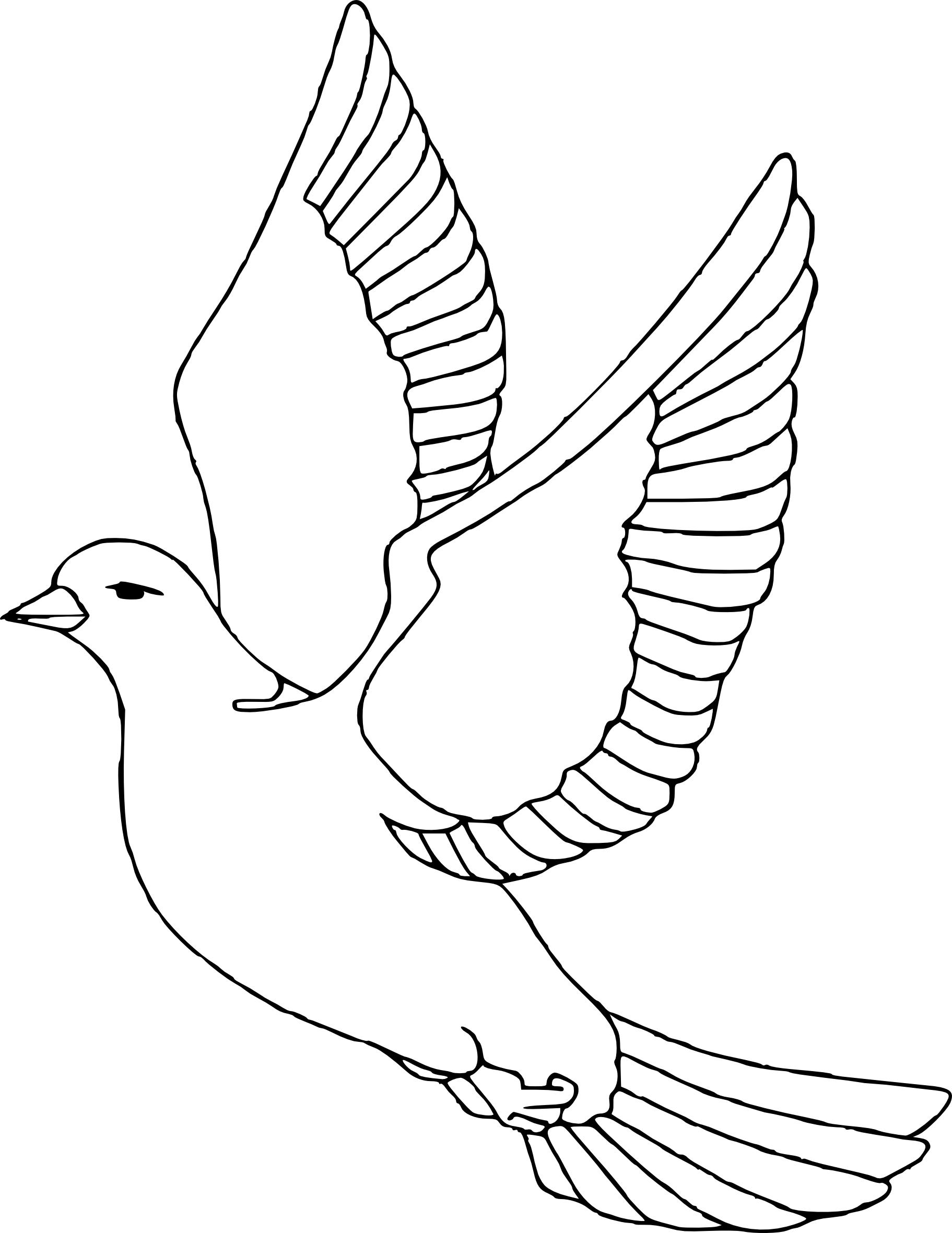 Coloriage la colombe oiseau à imprimer et colorier