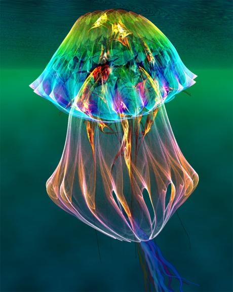Meduse multicolore