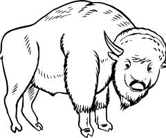 Coloriage bison