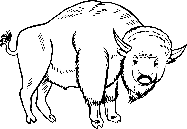 Coloriage bison gratuit imprimer et colorier - Coloriage bison ...
